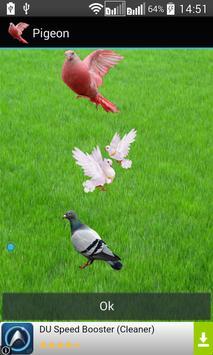 Pigeon Widget for LOVE poster