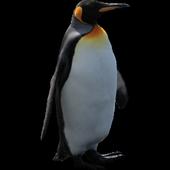 Funny Penguin Widget/Stickers icon