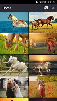 Cool Horse Wallpapers poster