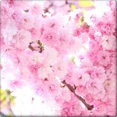 Aroma flower Wallpaper icon