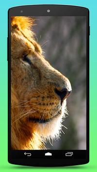 Wild Lion Live Wallpaper poster