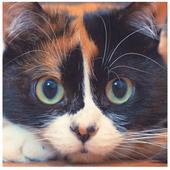 Куки Кот icon