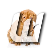 Cats And Dogs Wallpapers 2 icon