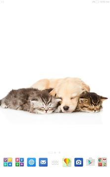 Cats And Dogs Wallpapers 2 screenshot 10