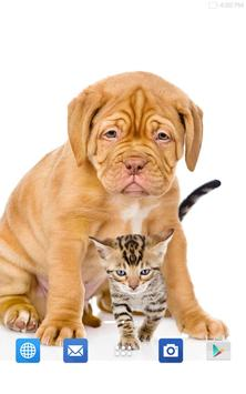 Cats And Dogs Wallpapers 2 screenshot 13