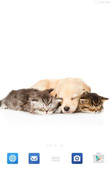Cats And Dogs Wallpapers 2 screenshot 16