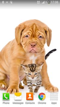 Cats And Dogs Wallpapers 2 screenshot 1