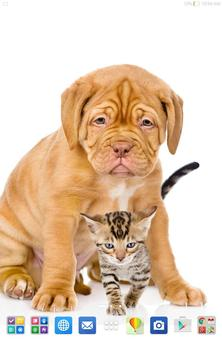 Cats And Dogs Wallpapers 2 screenshot 7