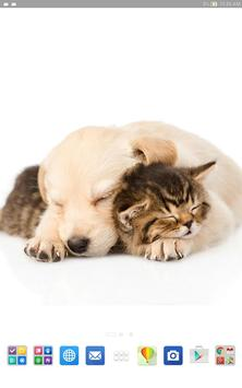 Cats And Dogs Wallpapers 2 screenshot 9