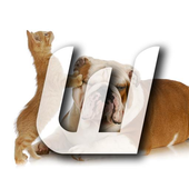 Cute Cats & Dogs Collection 3 icon