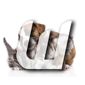 Cute Cats&Dogs Wallpapers 4 icon