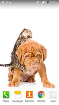 Cute Cats&Dogs Wallpapers 4 screenshot 3