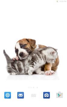 Cute Cats&Dogs Wallpapers 4 screenshot 13