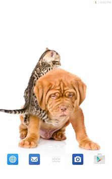 Cute Cats&Dogs Wallpapers 4 screenshot 15