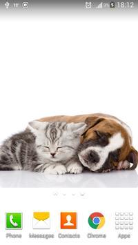 Cute Cats&Dogs Wallpapers 4 screenshot 2
