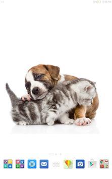 Cute Cats&Dogs Wallpapers 4 screenshot 7