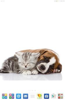 Cute Cats&Dogs Wallpapers 4 screenshot 8