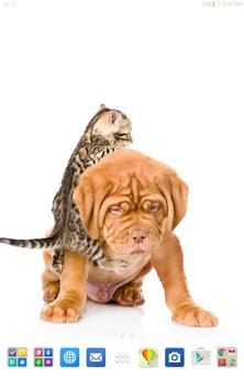 Cute Cats&Dogs Wallpapers 4 screenshot 9