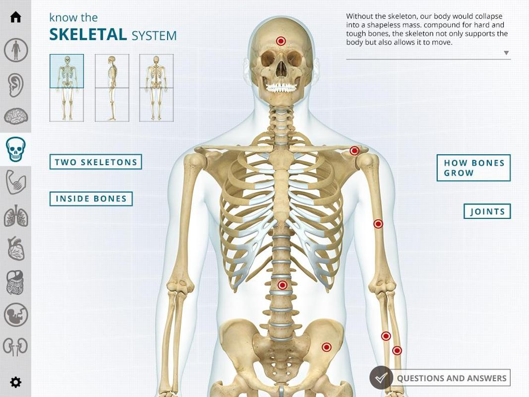 i-Wow Atlas Human Body APK Download - Free Education APP for Android ...