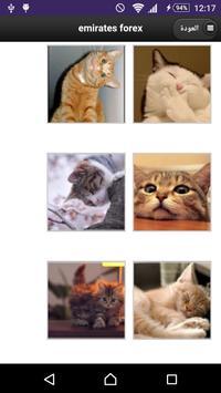 خلفيات قطط poster