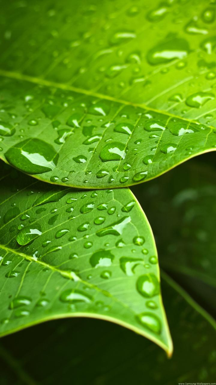 Water Drop Wallpapers For Android Apk Download