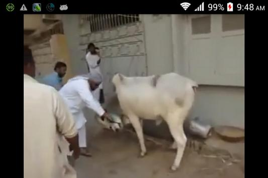Bakra Eid Funny Videos for Android - APK Download