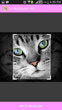 Cat Wallpapers HD apk screenshot