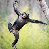 Monkeybars - Best Practice icon
