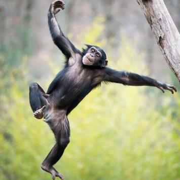 Monkeybars - Best Practice apk screenshot