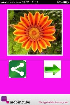 Flores apk screenshot