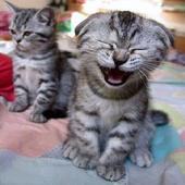 Cat pictures icon