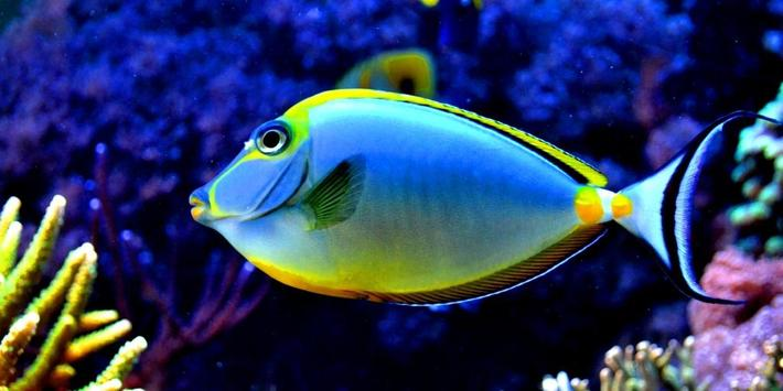 Colorful Fishes Live Wallpaper apk screenshot