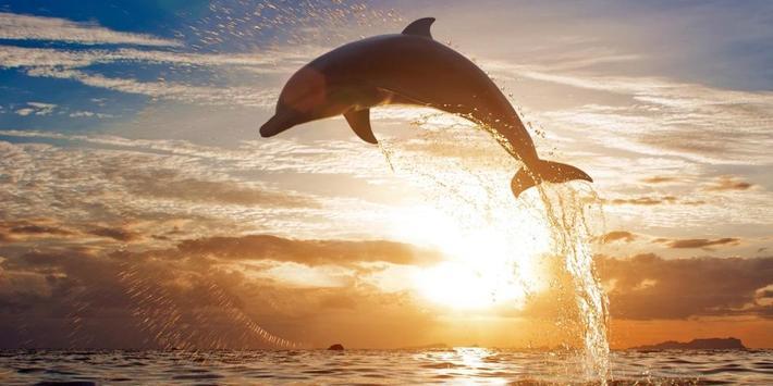 Dolphins Live Wallpaper apk screenshot