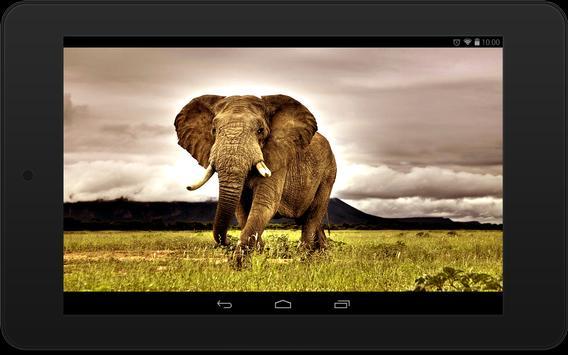 Elephant Wallpapers screenshot 6