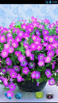 Flower  Wallpapers screenshot 4