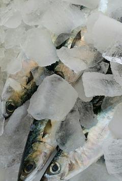 배들어오는날 - 산지 해산물 직배송 알림 서비스 screenshot 4