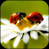 Ladybug HD Wallpaper icon