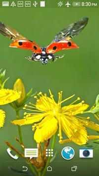 Ladybug HD Wallpaper screenshot 3