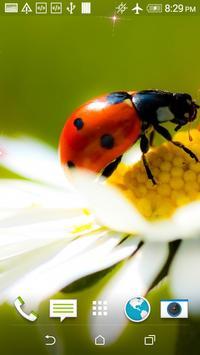 Ladybug HD Wallpaper poster