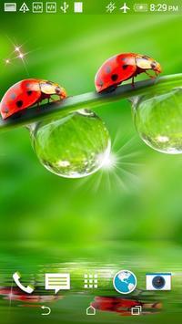 Ladybug HD Wallpaper screenshot 1