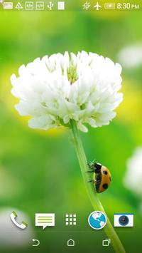 Ladybug HD Wallpaper screenshot 2