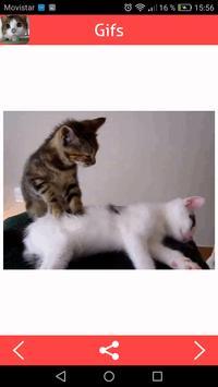Cats Gifs screenshot 5