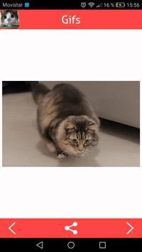 Cats Gifs screenshot 1