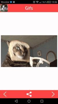 Cats Gifs screenshot 2