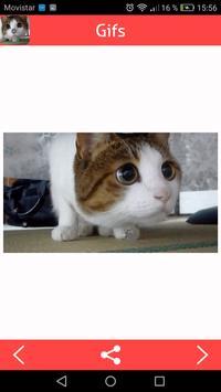 Cats Gifs screenshot 3