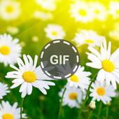 Flower Gifs icon