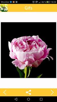 Flower Gifs screenshot 3