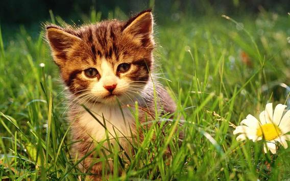 Cute Baby Cat poster