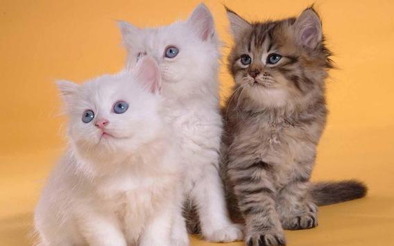 Cute Baby Cat apk screenshot