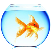 Goldfish Live Wallpaper Pro icon